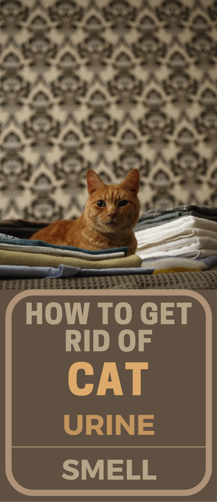 How To Get Rid Of Cat Urine Smell Topcleaningtips Com Cat Urine Smells Cats Smelling Cat Urine