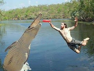 ultimate frisbee with gators ehhh party pinterest funny