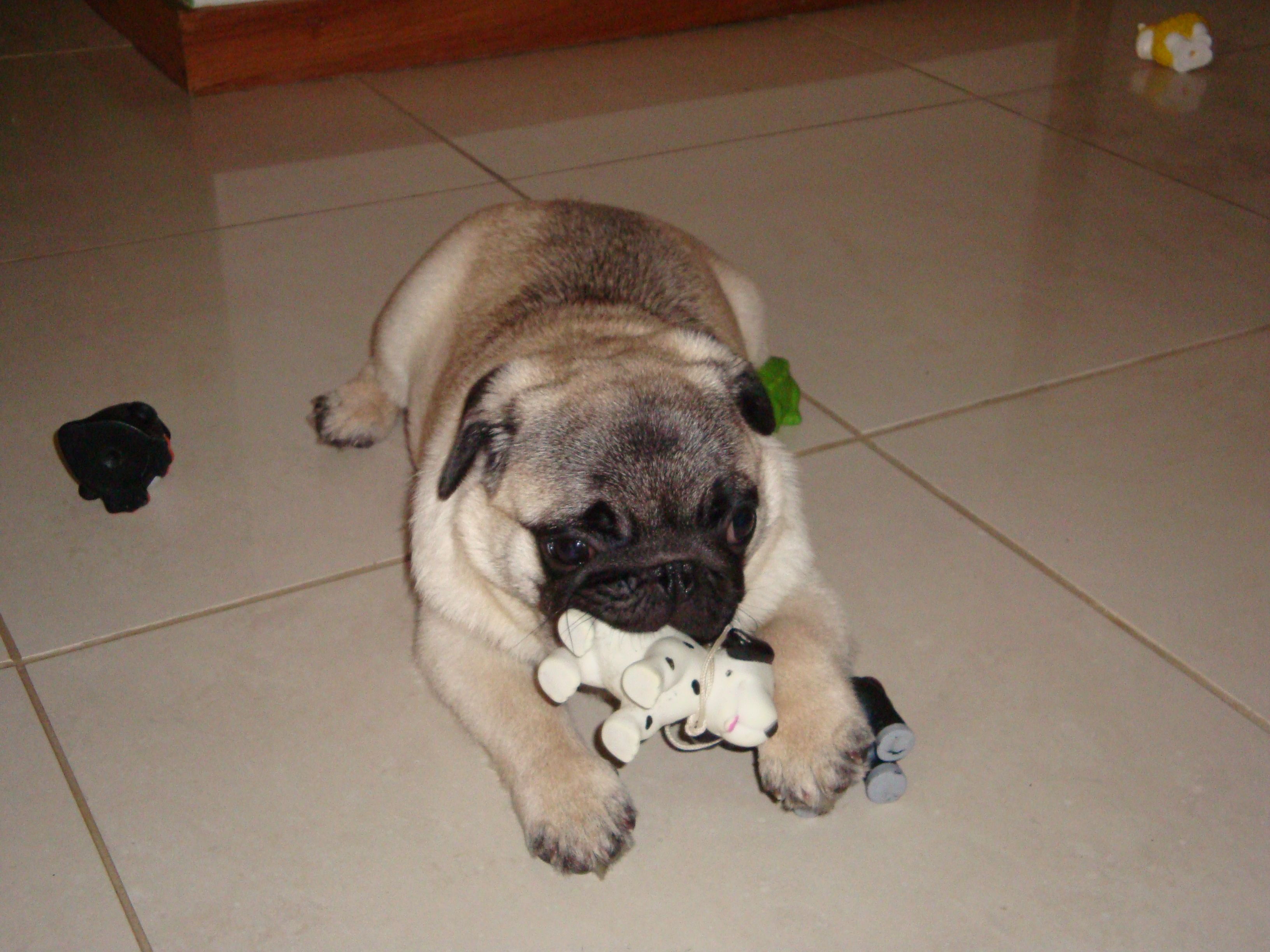 10) Thor roendo o brinquedo