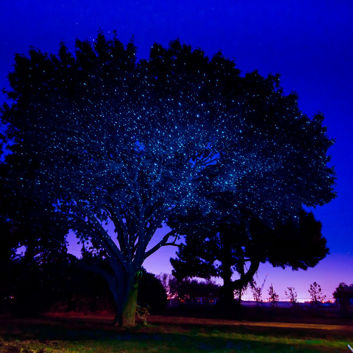 Laser Lights Outdoor Part - 45: Laser Christmas Lights | Illuminator Laser Lights | Sparkle Magic