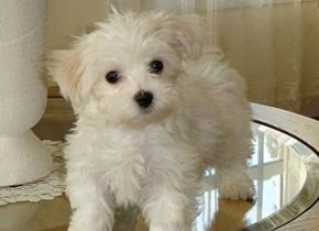 Top 20 Cutest Dog Breeds Around The World Cute Animals Cute