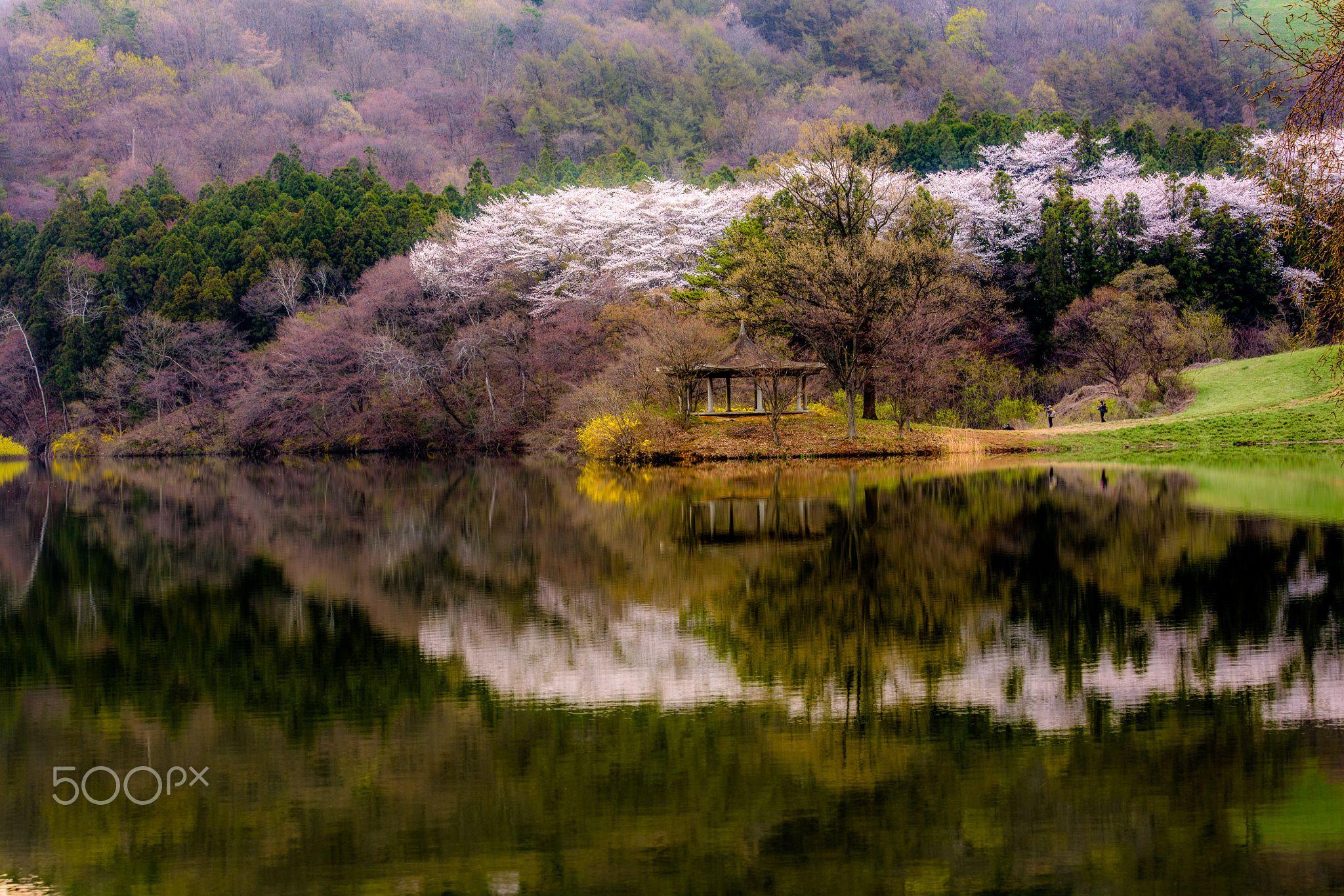 spring - Korea landscape 서산 용비지