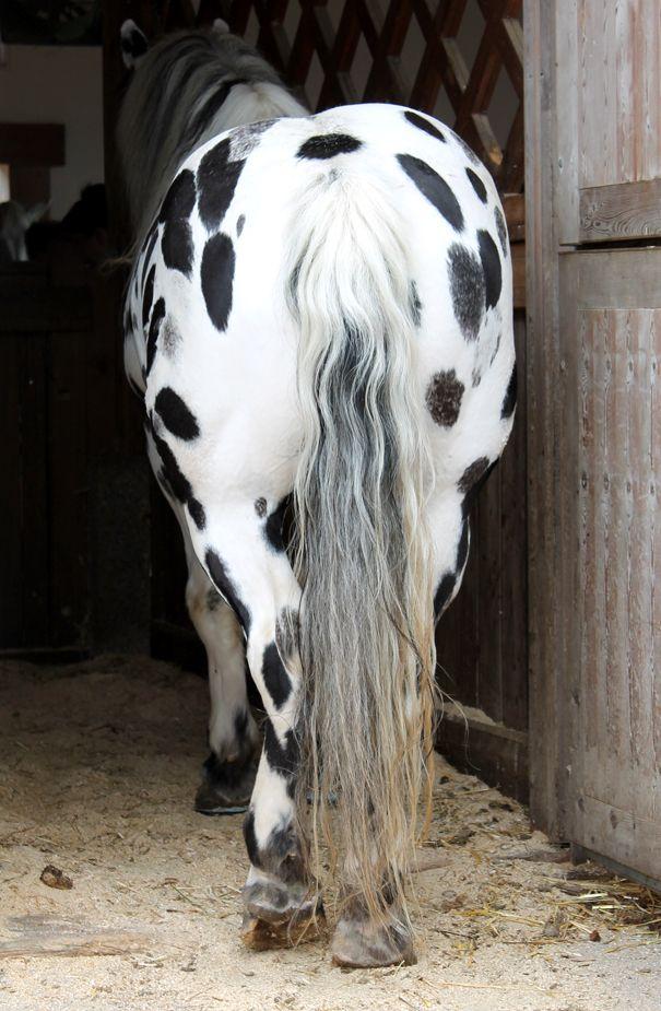Happy Horse At The Animal Sanctuary Gut Aiderbichl In Austria