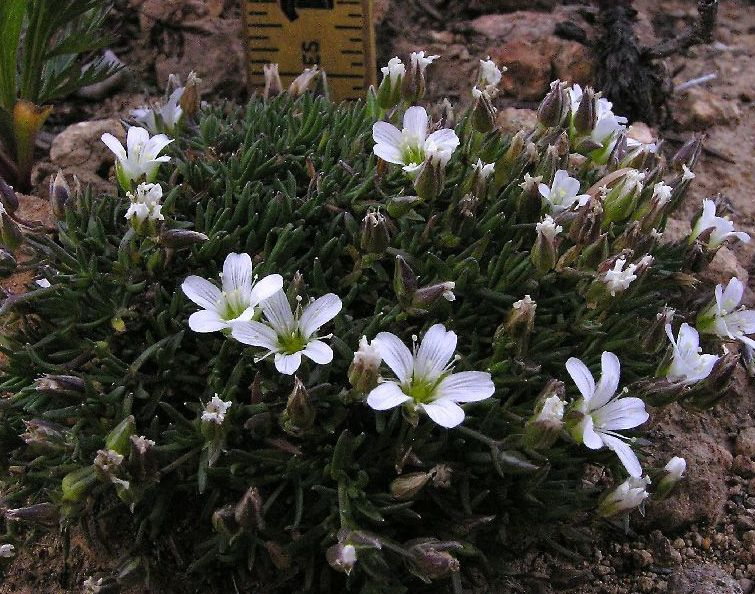 Arctic Tundra Plants with Names | ... tundra plants. Photo ...