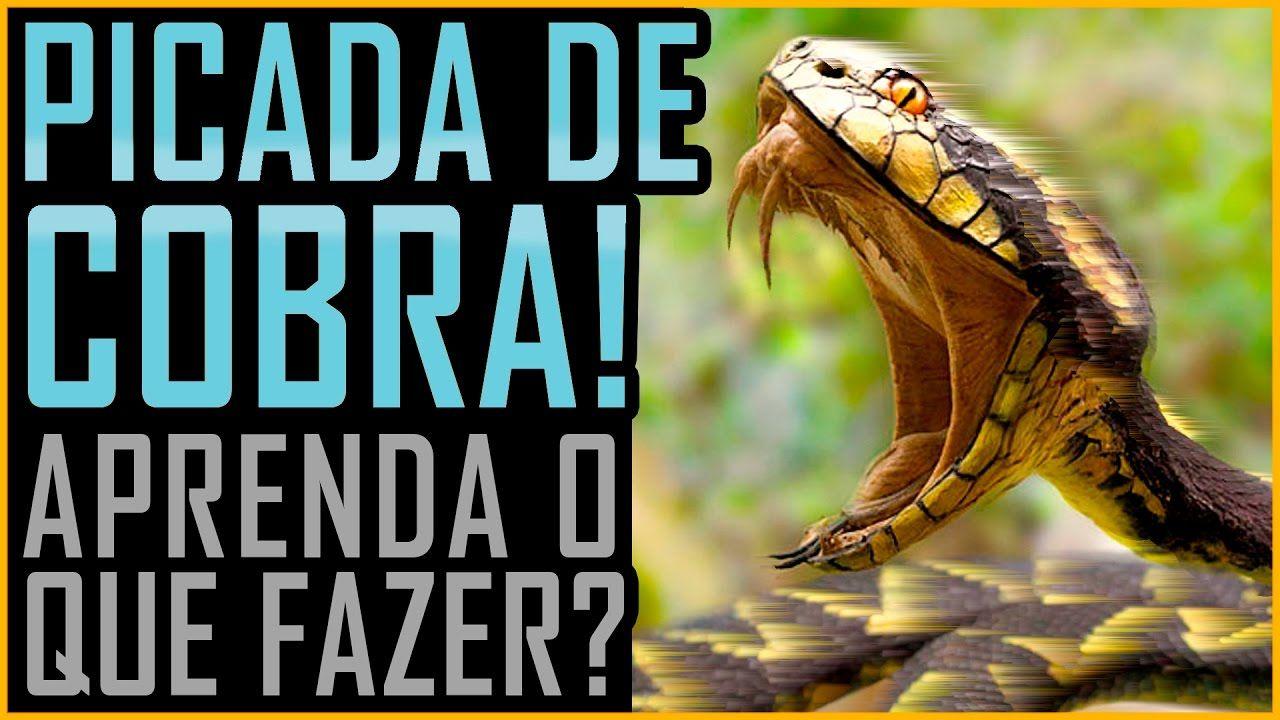 Picada De Cobra O Que Fazer Butantan Venenosa Peconhenta