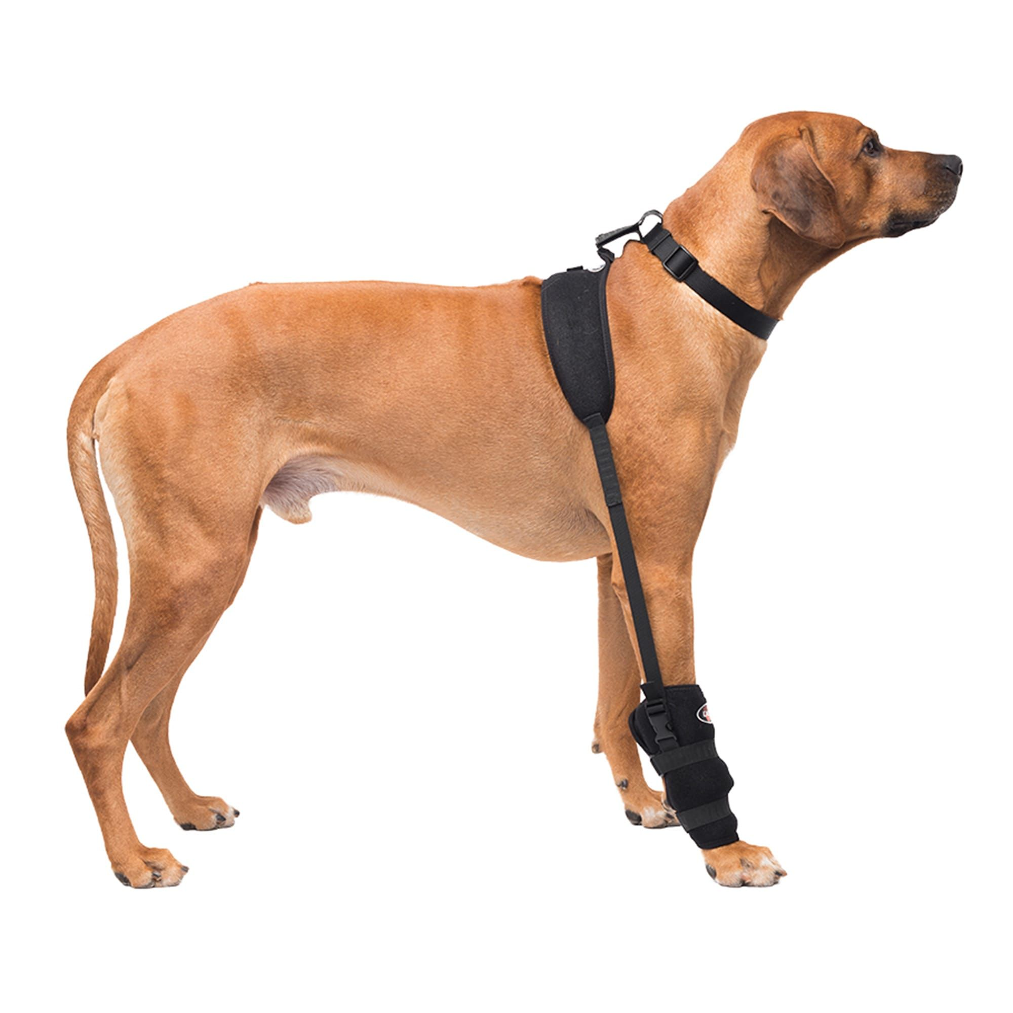 Caldera Hot & Cold Therapy Wrap with Gel for Dog Carpals