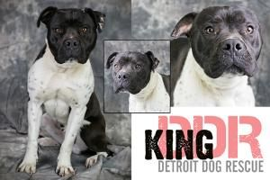 Adopt King on | Adoptables on Petfinder | Dogs, Rescue dogs