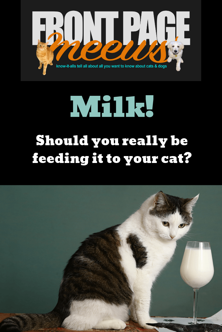 Should You Really Be Feeding Your Cat Milk? Dog milk