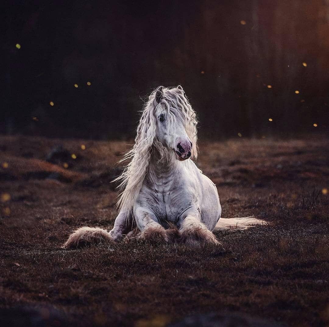 Pin Von Silvia Vock Auf Pferde Schonste Pferde Pferde