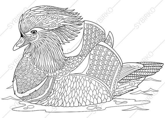 Mandarin duck 2 Coloring Pages