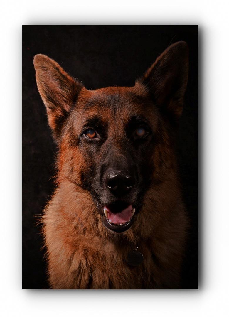 Training Your German Shepherd Dog German Shepherd Breeders