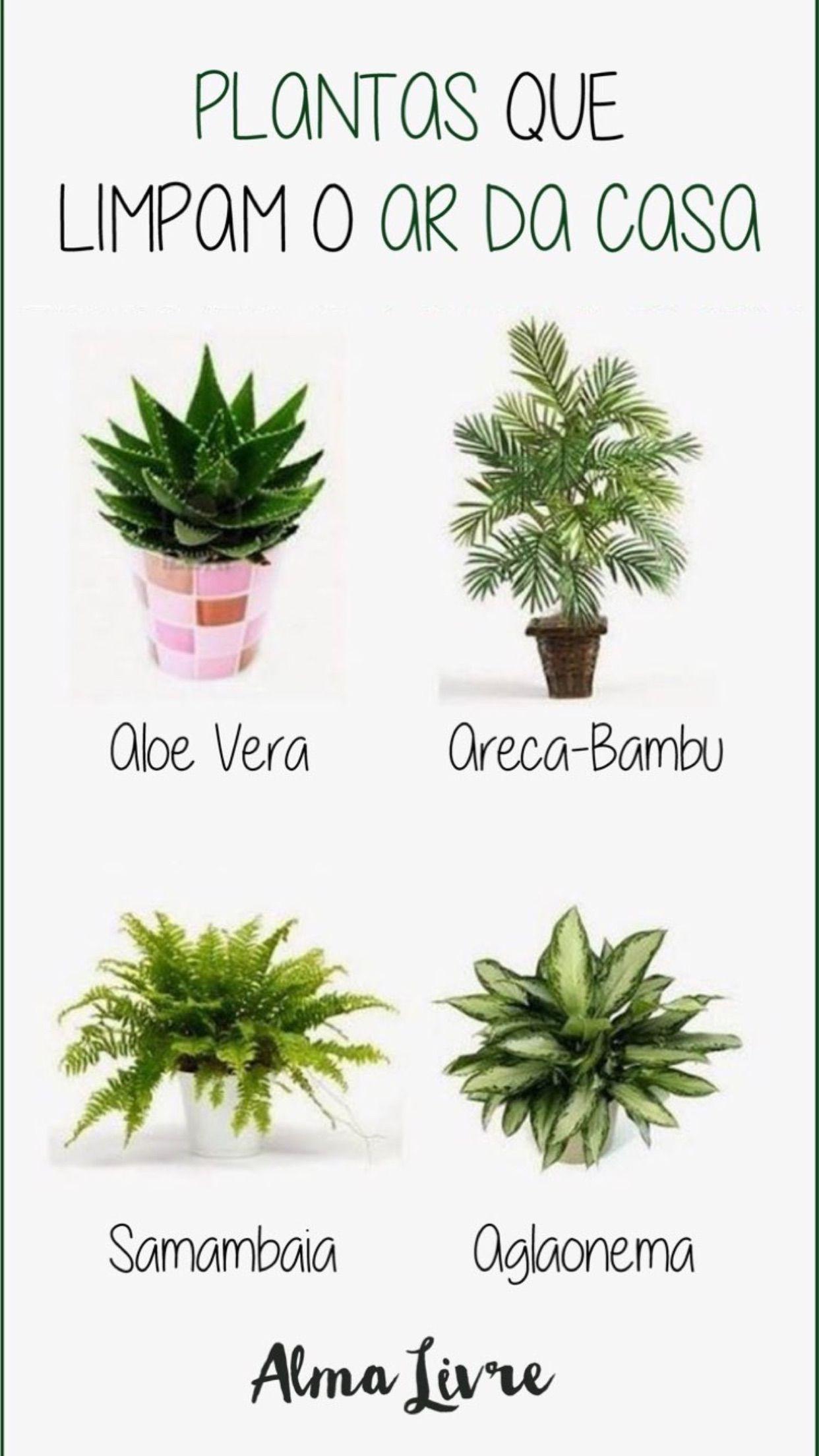 Plantas Plantas Jardim Ideias De Jardinagem