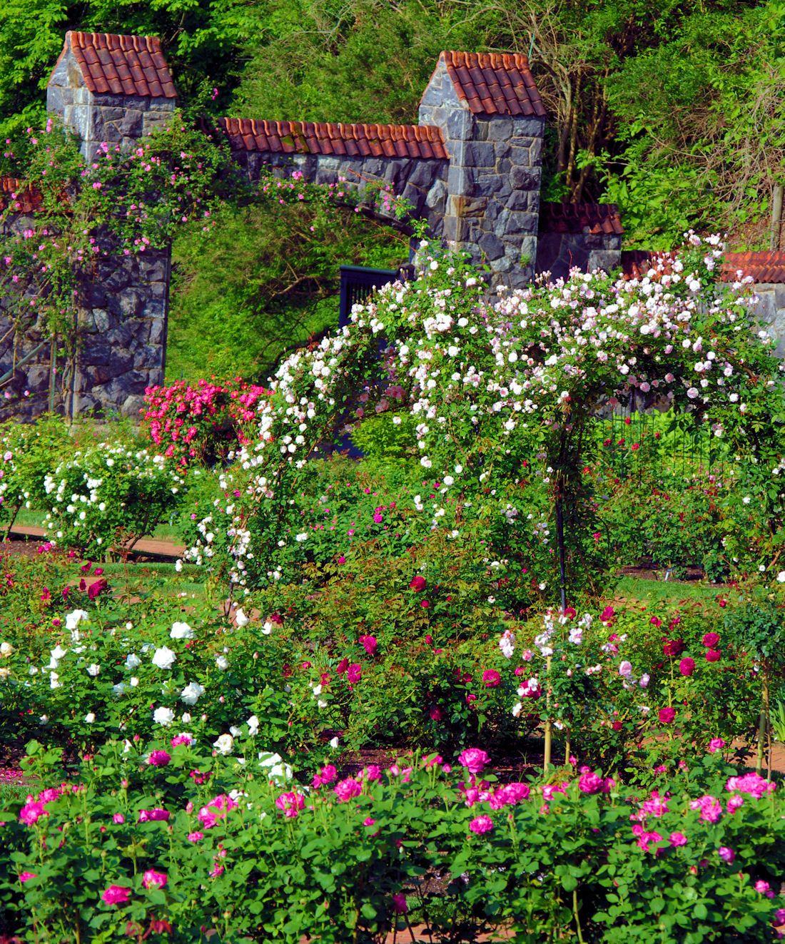 The Rose Garden At Biltmore Estate In Asheville