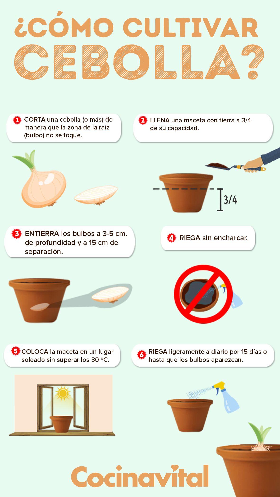 Cómo Cultivar Cebollas Sin Semillas En Macetas Jardín De Productos Comestibles Limonero En Maceta Jardín De Vegetales