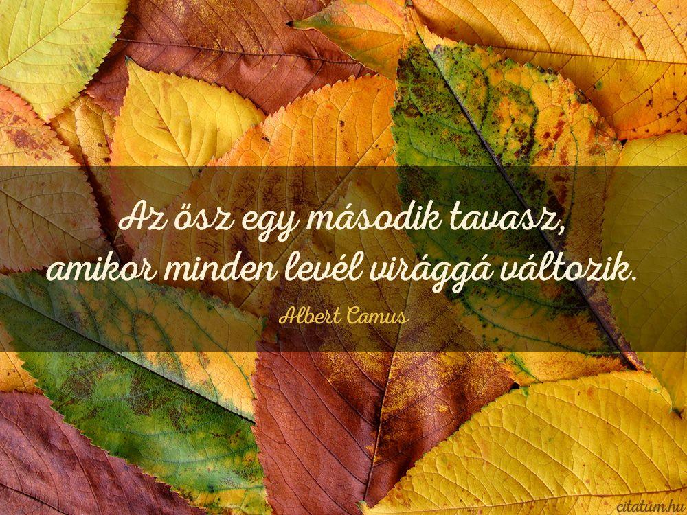 motivációs levél idézetek Albert Camus idézet az őszről.   Plant leaves, Life, Quotes