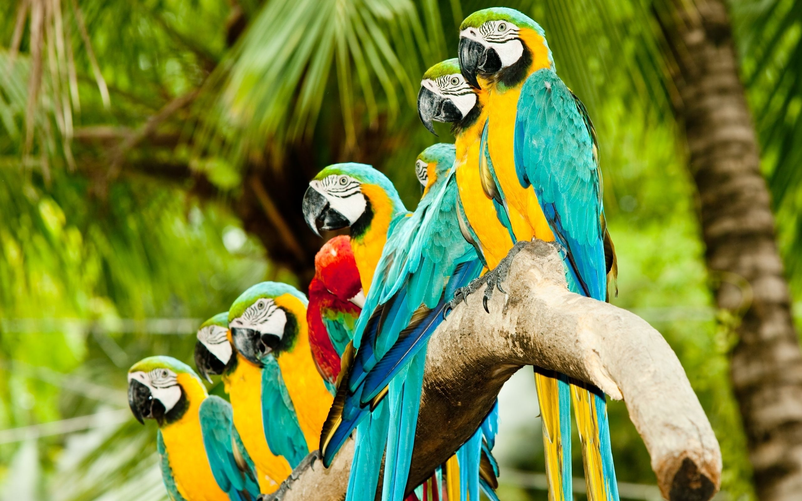 Image Detail For Colourful Parrots Hd Wallpaper Birds Hd Widescreen Wallpapers 2560 Pet Birds Animals Beautiful Beautiful Birds