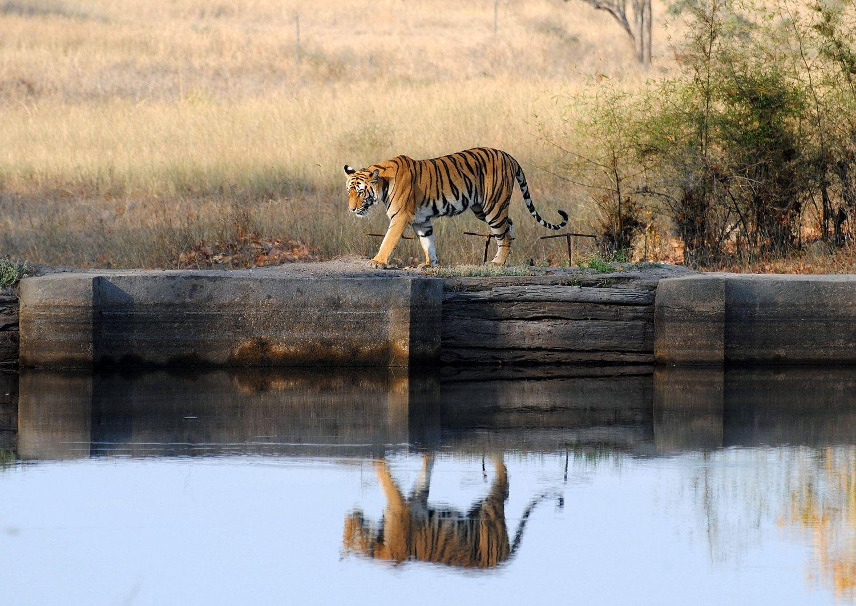 Pin on wildlife photography