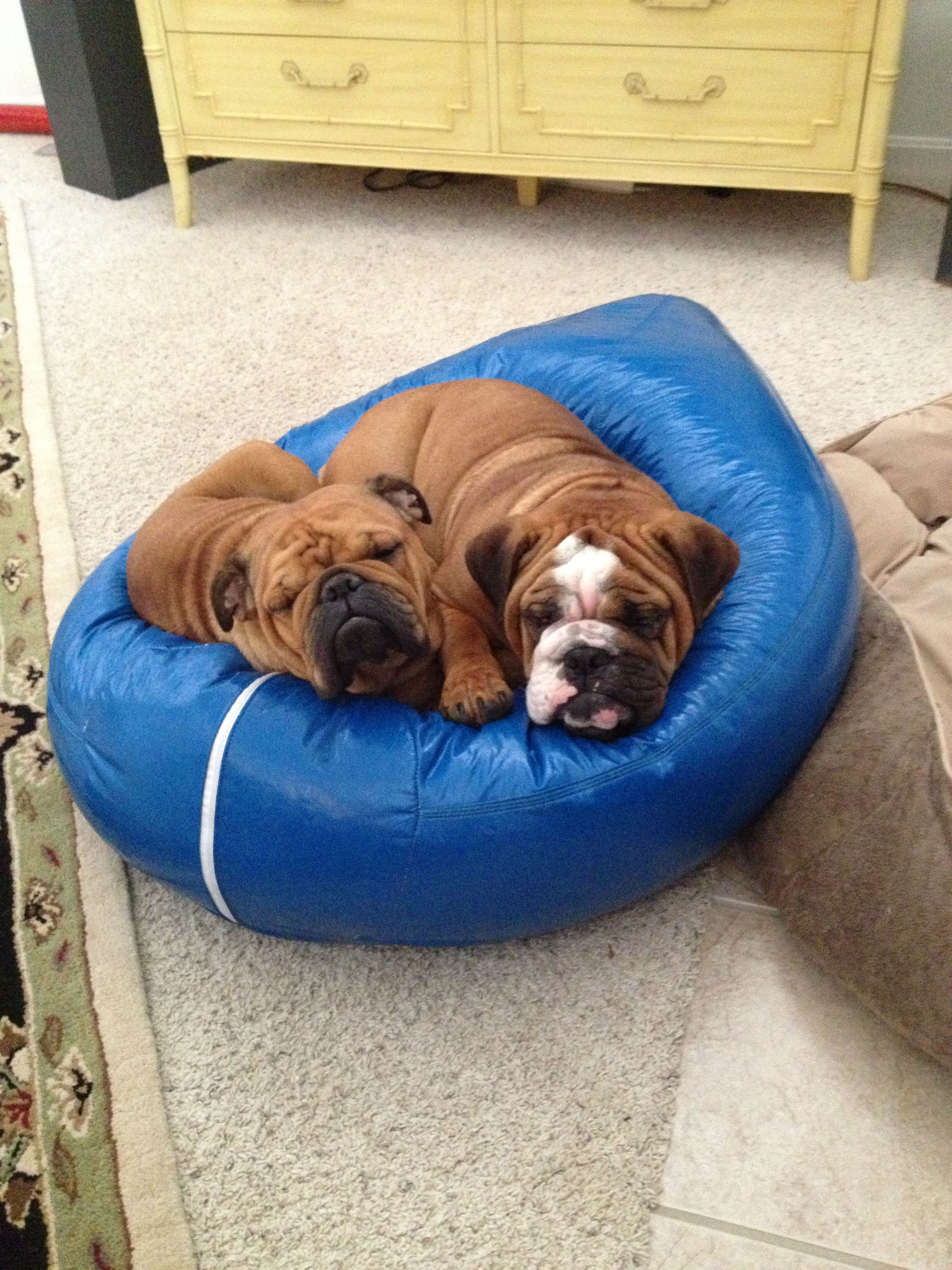 Best dog bed EVER! Wipe clean, done! Cool dog beds, Dog