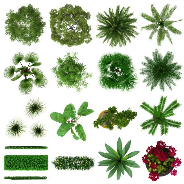 Tropical Plants Top View Collection Pinteres
