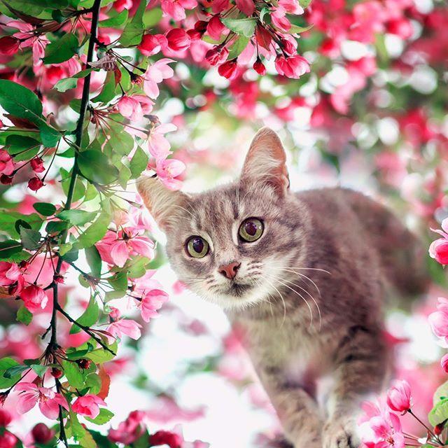 Mundgeruch? Alarm!  In 48 h entstehen Entzündungen im Mund! Bakterien sind die Ursachen. Mit Zahnputzflocken sind die mal weg! und Entzündungen gehen zurück! #lovecats #lovekittens #ilovemycat #qchefscats #instagramcats #instacat #tiergesundheit #katzenfutter #katzenfan #katzenbilder #zahnfleischentzündung #katzenleben #katzenfoto #hauskatze #katze #katzen #cats #cat #catlovers #mundgeruch #catlife #catloversclub #catstagram #catsofinstagram #catsoftheworld #catsoftheday #catworld #cats #katze #