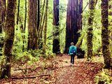 Santa Cruz Trails - Best Santa Cruz camping, hiking & biking trails   AllTrails.com