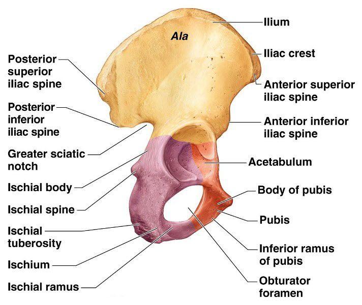 Icd 10 Hip Bone CPC Ortho Coding