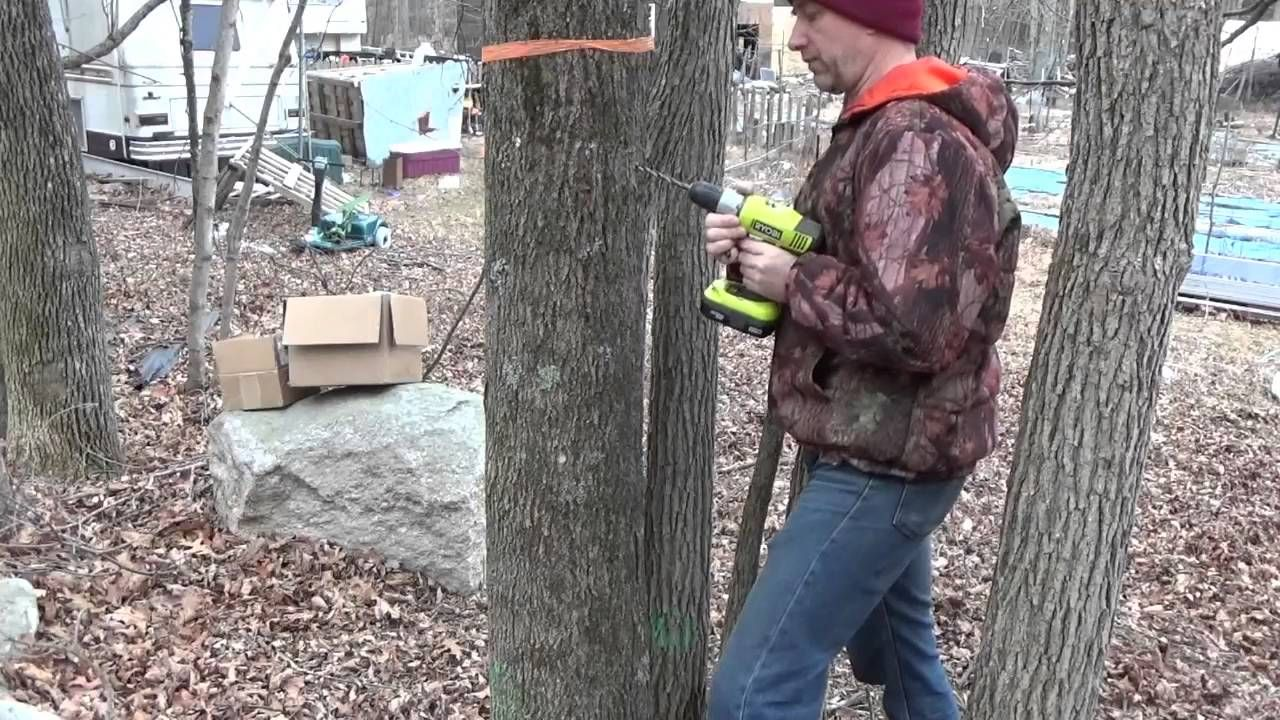 Tapping maple trees website work diy stuff pinterest today i am tapping my maple trees to process maple syrup get the off grid project t shirt ht solutioingenieria Image collections