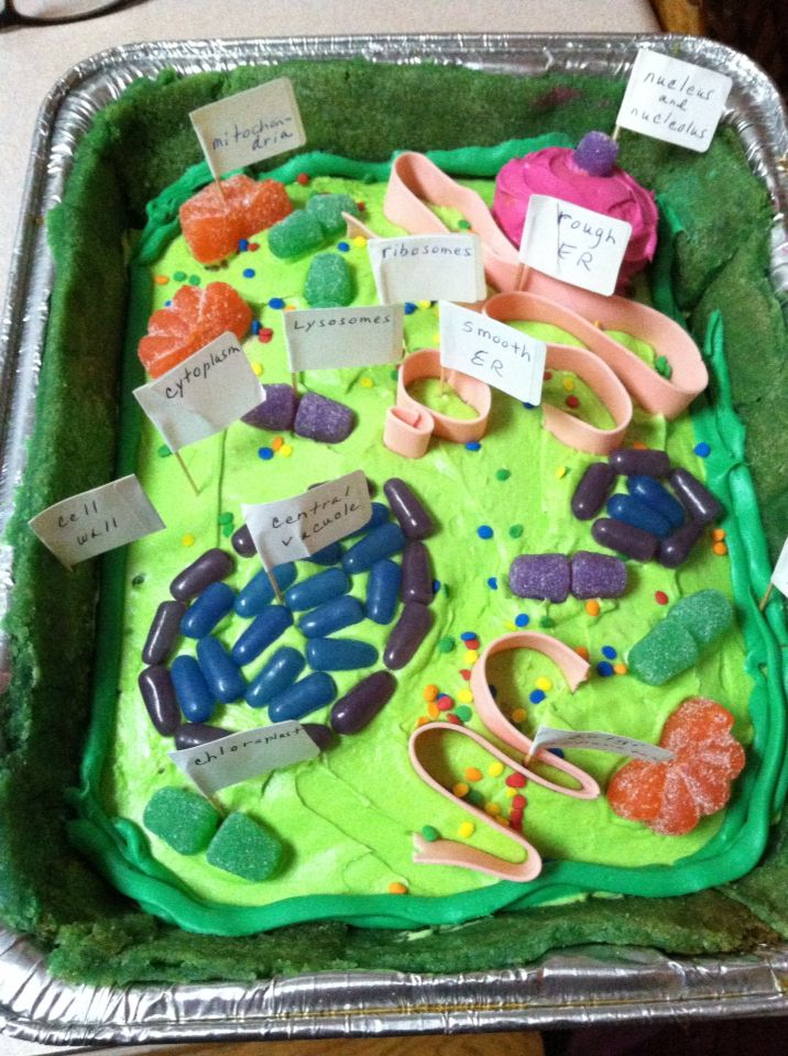 how to make a plant cell out of cake