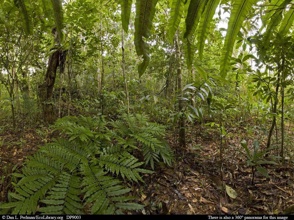 Tropical Rainforest Animals In Africa