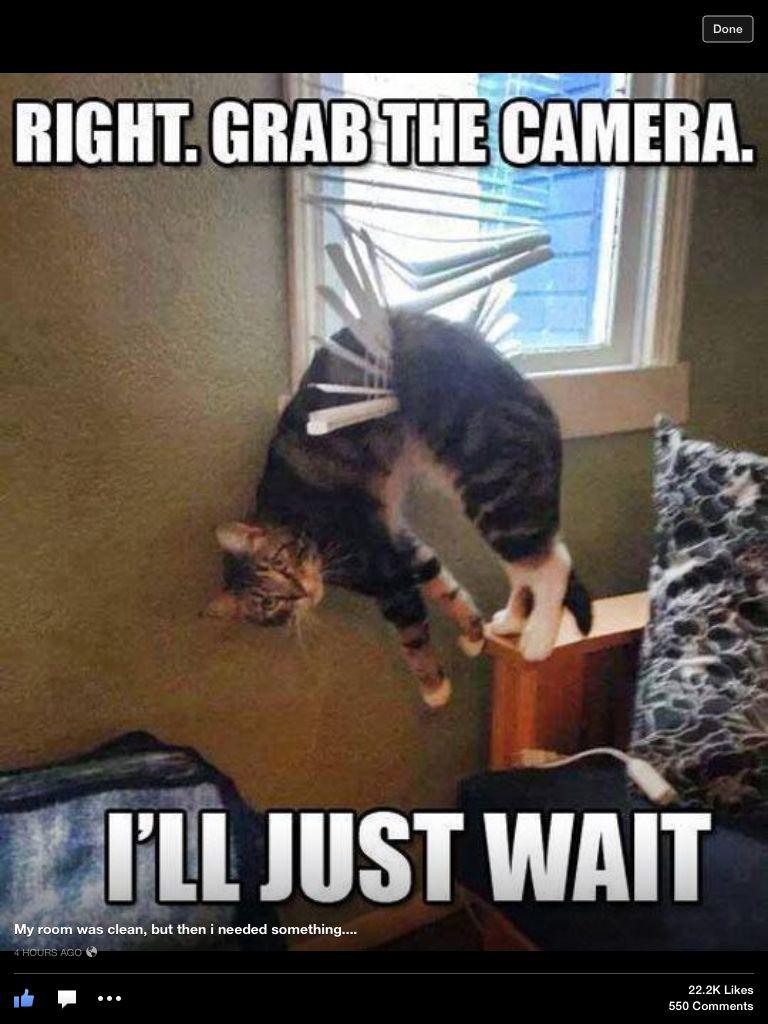 Lol Cats Are Just Kinda Stupid Cute Funny Animals Funny Animals Funny Animal Pictures