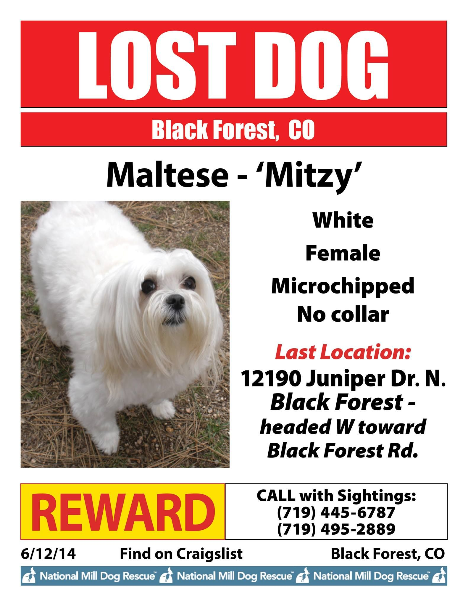 National Mill Dog Rescue Mitzy is lost in Black Forest