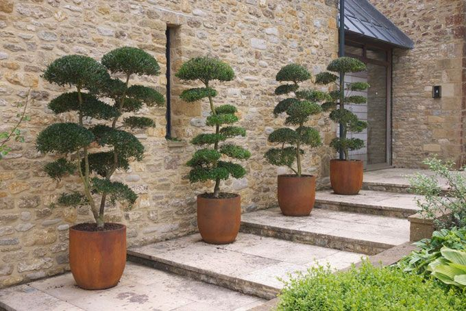 Cloud Pruned Trees I Am Attempting This With Buxus Sempervirens Might Take A Few
