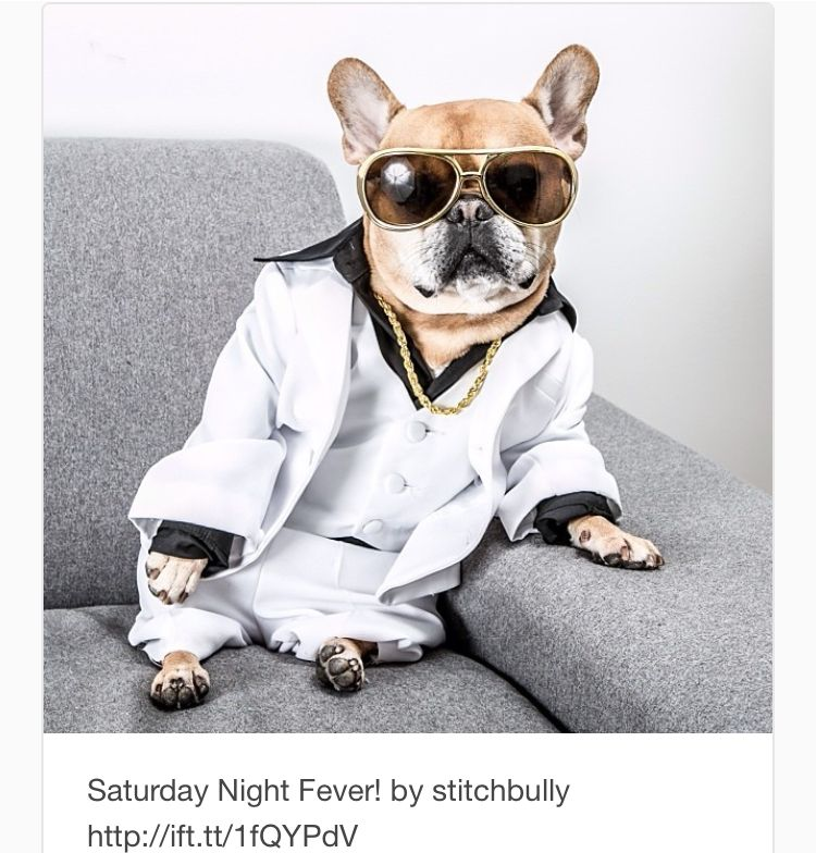 Ready To Get My Party On Cute French Bulldog French Bulldog