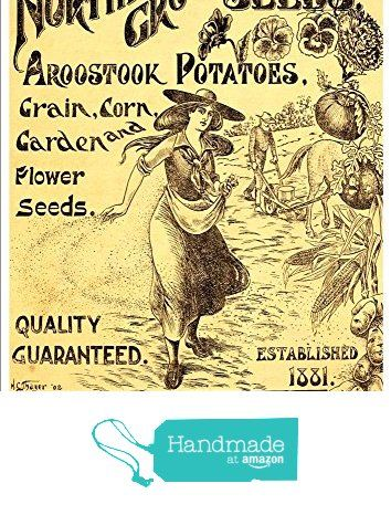 """""""The George W.P. Jerrard Co - Northern Grown Seeds, 1903"""" A4 Glossy Art Print Taken From A Beautifully Illustrated Vintage Seed Catalogue Or Seed Packet Cover. https://www.amazon.co.uk/dp/B01N2AVZ3M/ref=hnd_sw_r_pi_dp_PMwMyb3CTP79C #handmadeatamazon"""