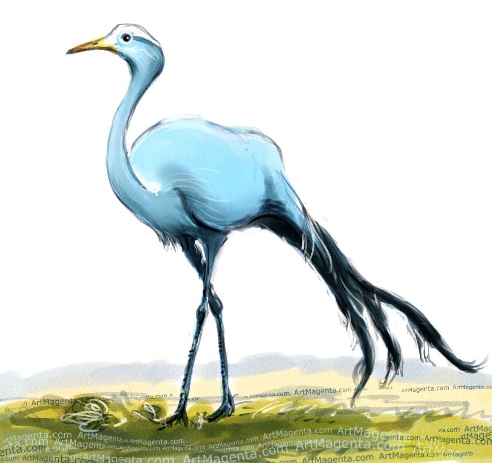 Blue Crane | For Da Boids | Pinterest | Bird Illustrators And Drawings