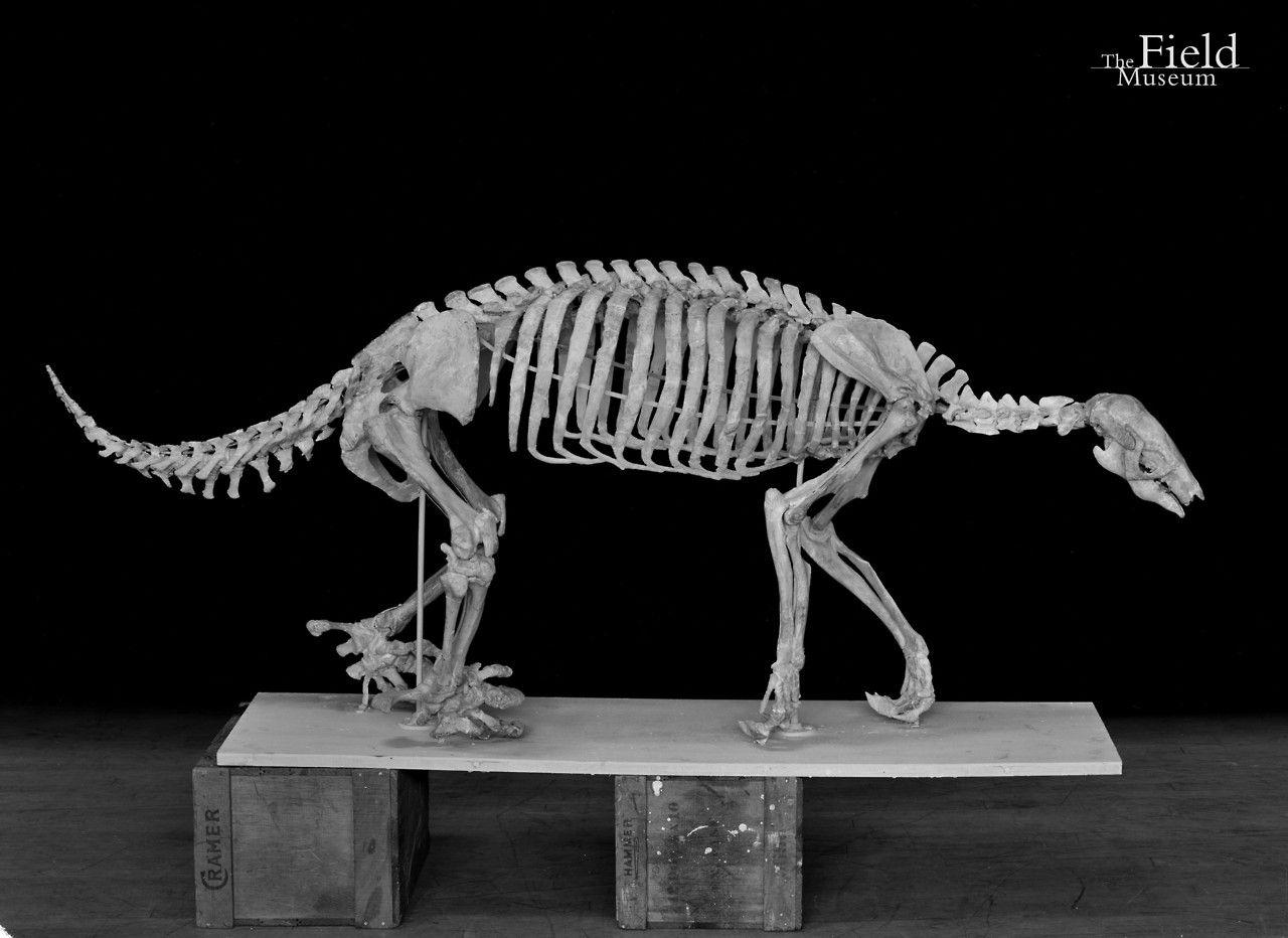 4610ca18b723e Fossil Friday