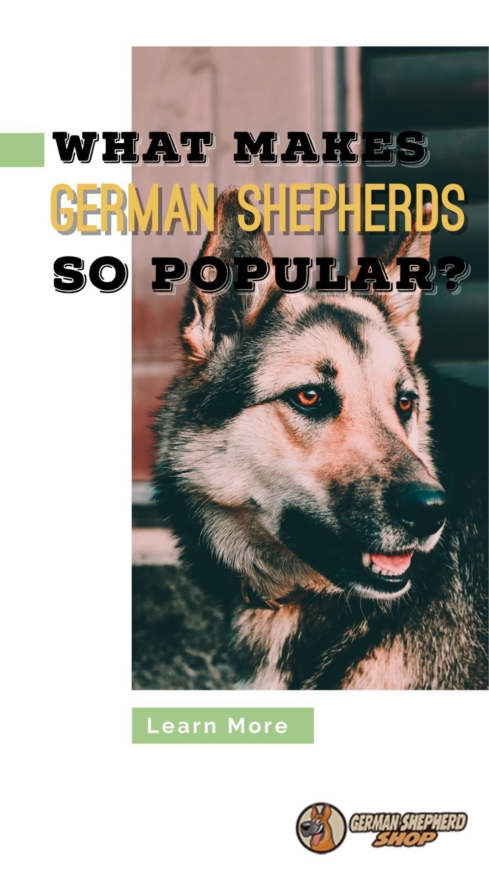 What Makes German Shepherds So Popular German Shepherd Training