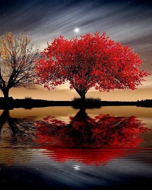 Beautiful Nature Girl Wallpaper: Reflections Of Red Tree In The Lake. In 2019
