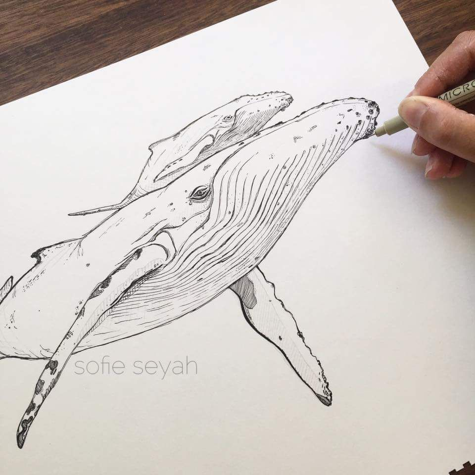 Humpback whale and calf - ink illustration by Sofie Seyah   Dibujo ...