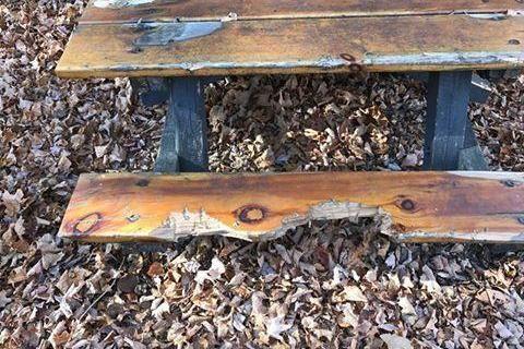 Bear Brutally Mauls Picnic Table At Michigan State Park Michigan - Picnic table michigan