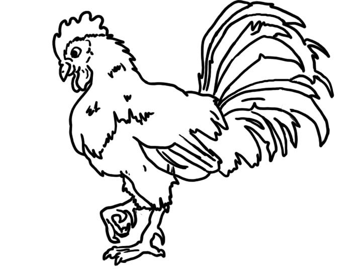 Rooster Coloring Page Bird Online Coloring Pages Page 1 Farm