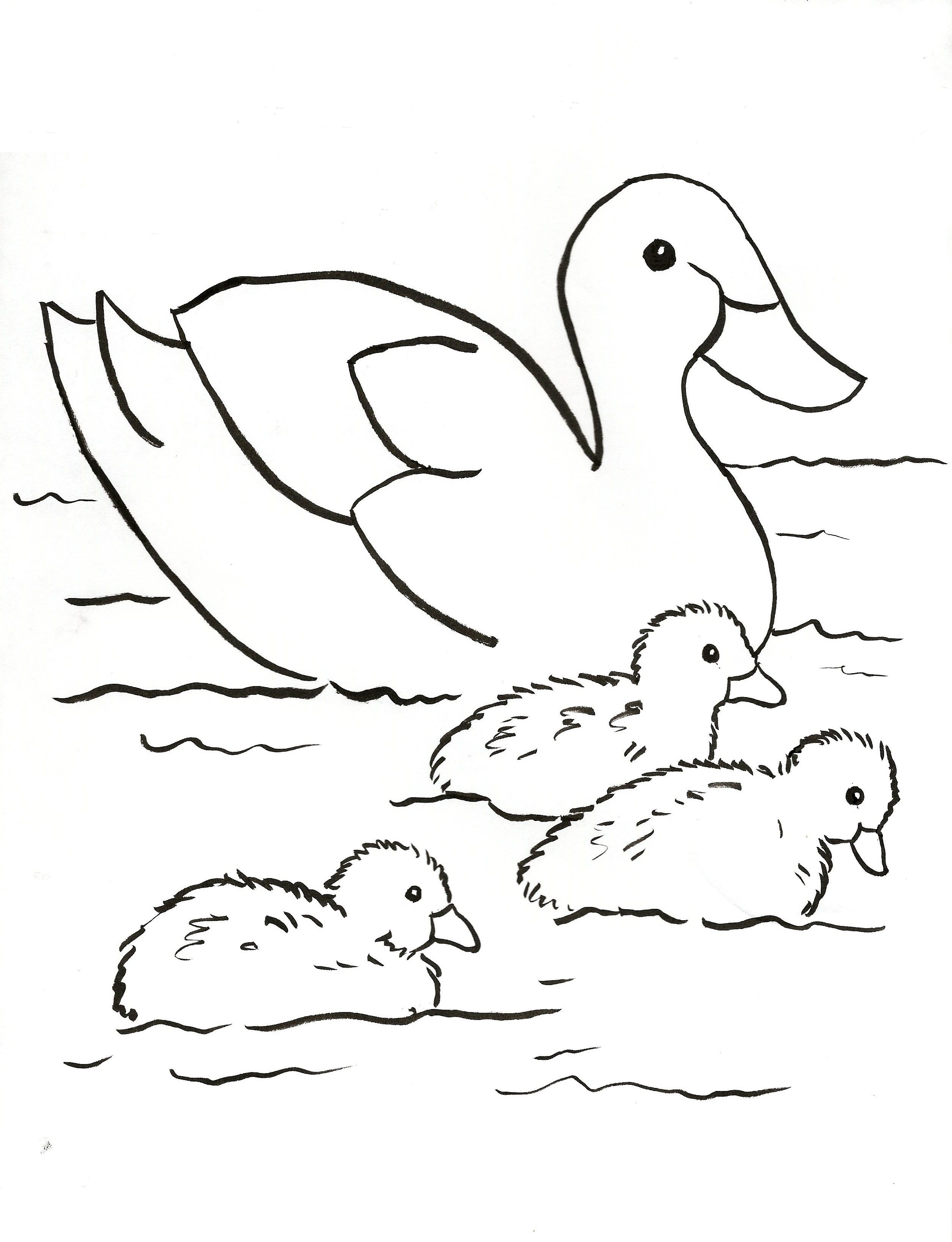 34 Fresh Duck Coloring Pages