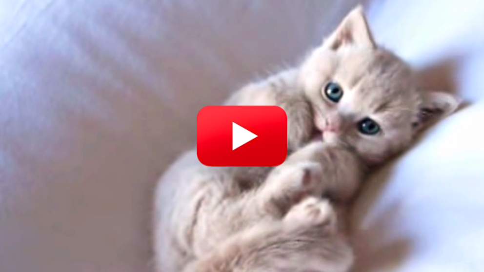 You Can T Miss Kitten S First Bath Caught On Camera Baby Kittens Kittens Crazy Cats