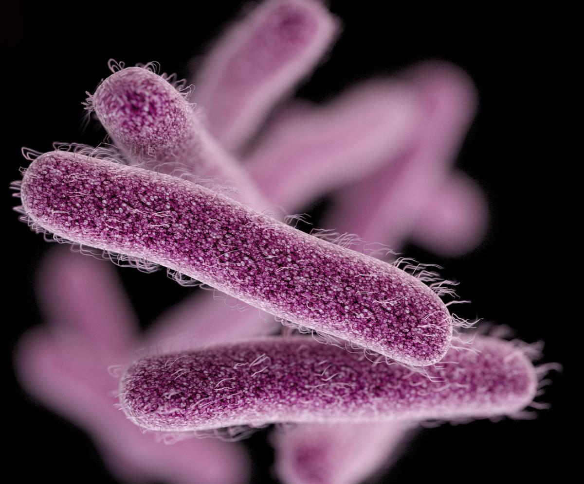 игре картинки шигелл микробиология нельзя