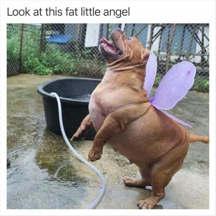 Funny Animal Memes Of The Day 26 Pics Cute Animals Funny Animals Funny Dogs