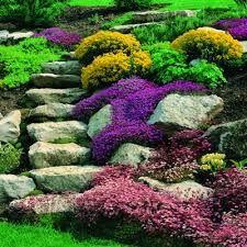 Giardino roccioso giardino pinterest giardino for Giardini rocciosi progettazione