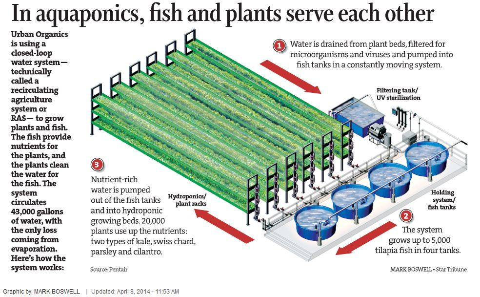 Aquaponics System By Pentair Aquatic Eco Systems Aquaponies Hydroponics Grow Grading