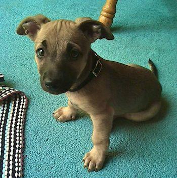 Inventory List Inspiration Pinterest Dogs