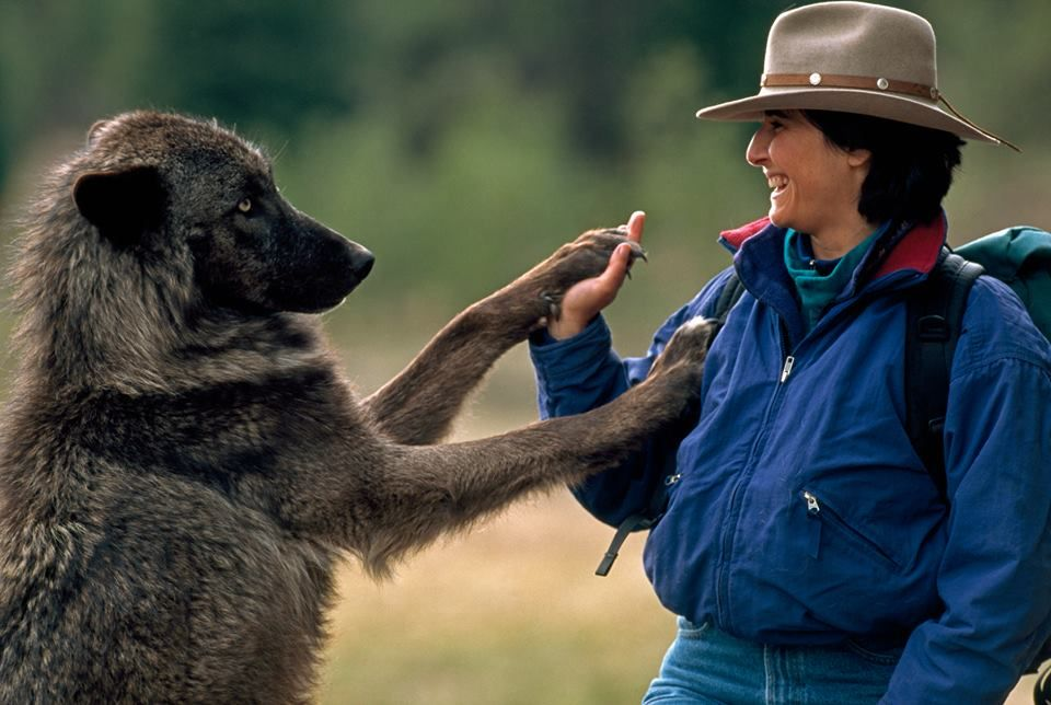 Jamie Dutcher and Friend from Living With Wolves