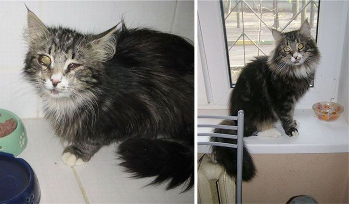 147 Powerful Before After Pics Show How Rescue Can Change A Cat Cat Rescue Cat Adoption Cat Shelter